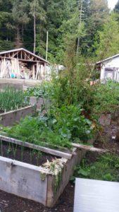 Rob Peter's garden